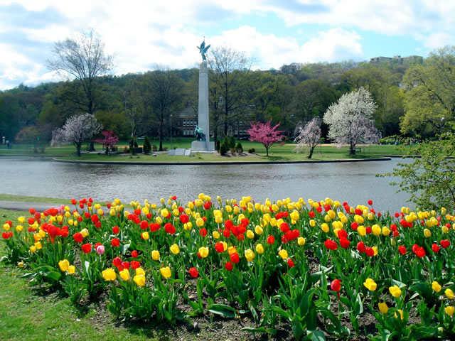 Tulips blooming at Edgemont Memorial Park - #MayInMontclair