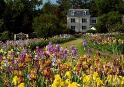 Bloom Room Open and Presby Iris Plant Sale